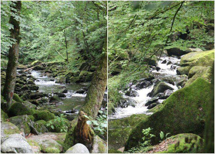 Mein Sommer - Wasserläufe im bayrischen Wald - diephotographin