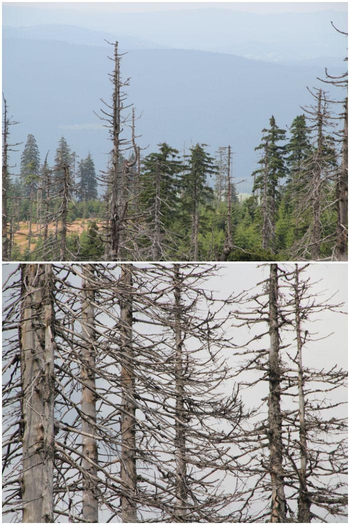 Mein Sommer - Wälder im bayrischen Wald - diephotographin