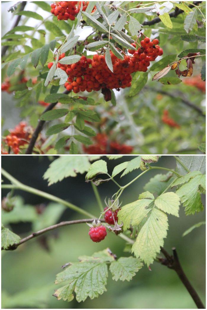 Mein Sommer - Beeren im bayrischen Wald - diephotographin