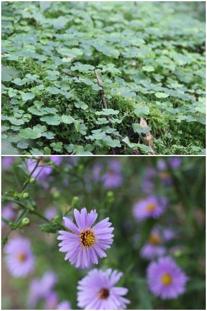 Mein Sommer - Blumen und Klee im bayrischen Wald - diephotographin