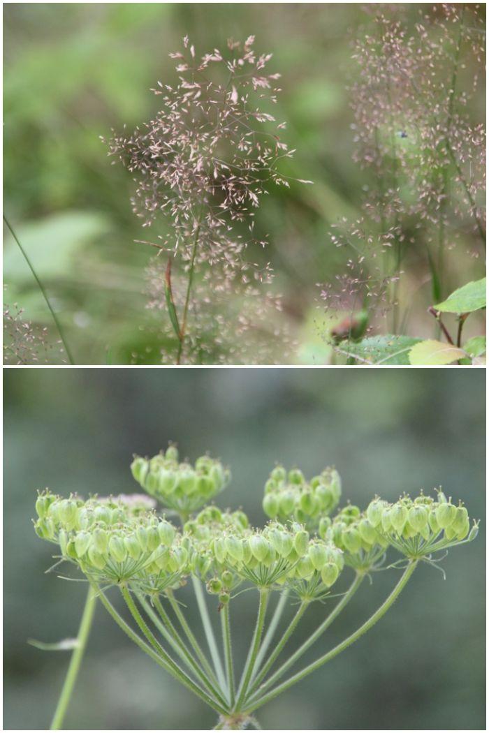 Mein Sommer - Gräser und verblühte Blumen im bayrischen Wald und im Wiesbadener Kurpark - diephotographin
