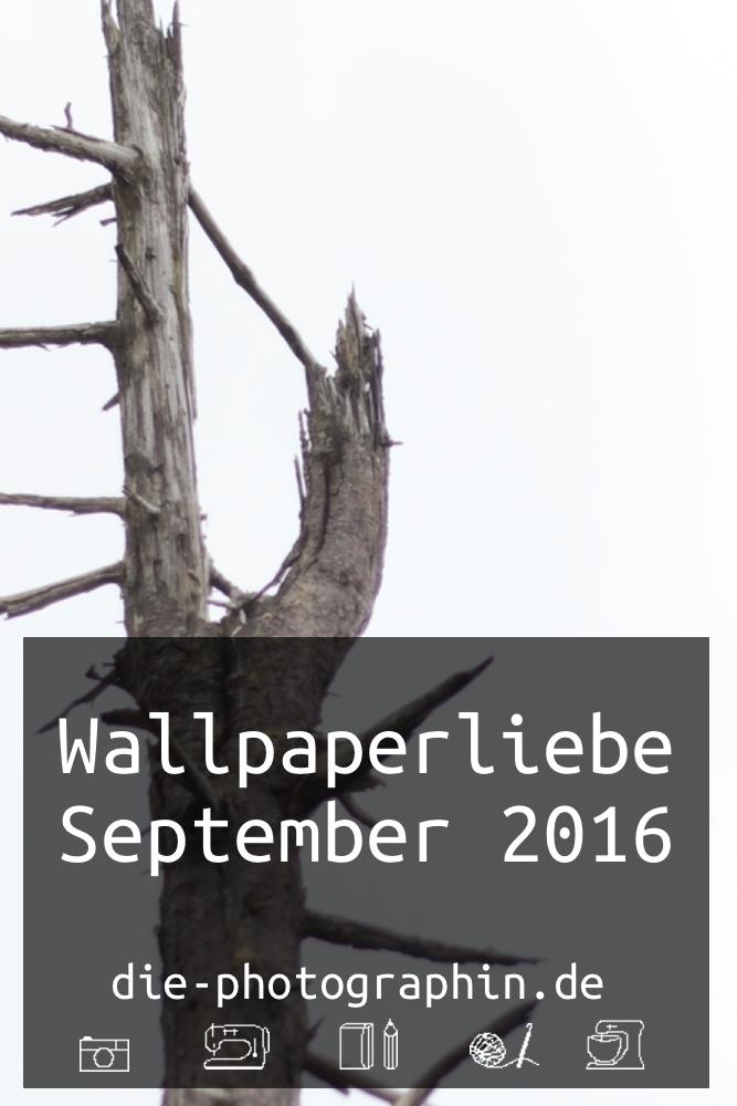 wallpaperliebe-september-pinterest-diephotographin-header