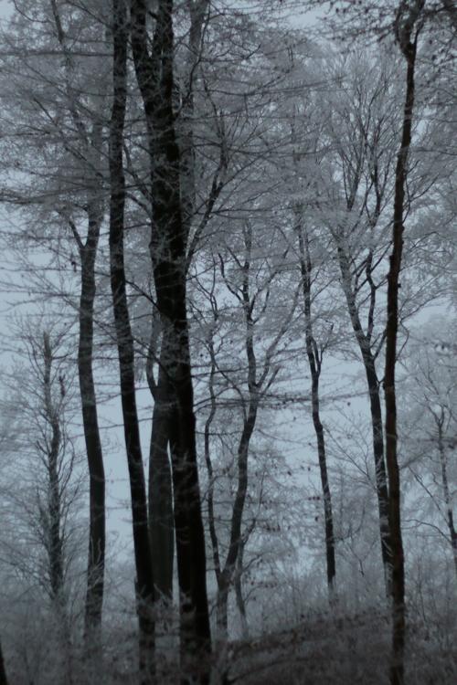 Winterwaldbild für den Monatsimpuls Januar: Wild für DIE SALONS - Bild von diephotographin