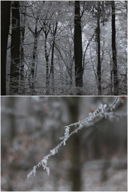 Winterbäume im Rabengrund in Wiesbaden - #fotoprojekt17 -diephotographin