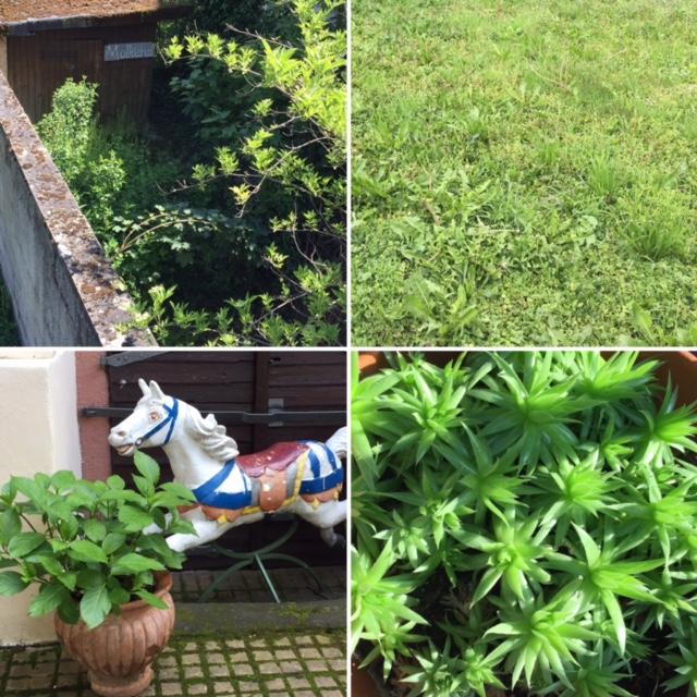 Increase Creativity Challenge Mai - Farbe grün - Es grünt so grün ... - diephotographin
