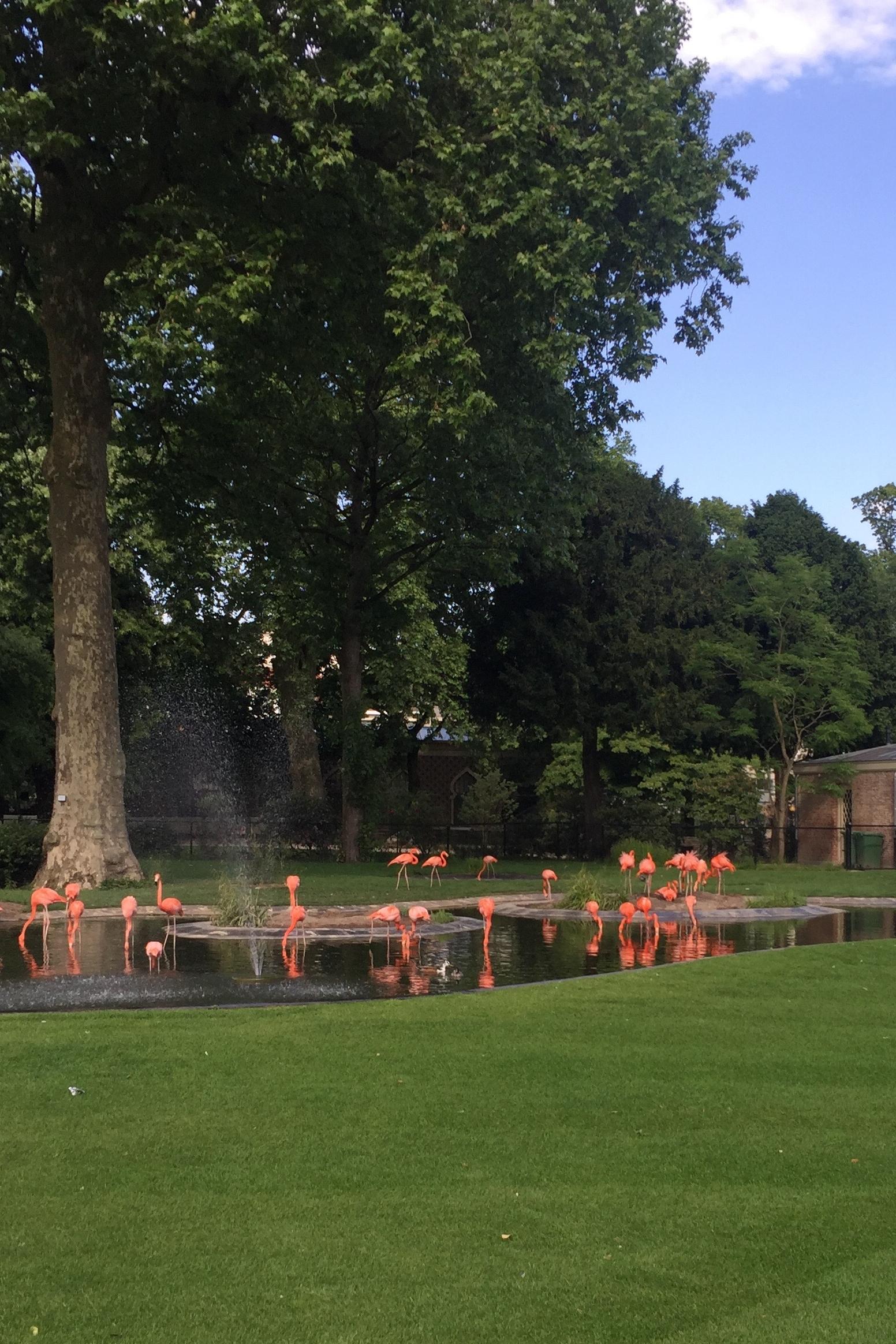 Increase Creativity Challenge Mai - Farbe grün - Flamingos im Zoo von Antwerpen - diephotographin