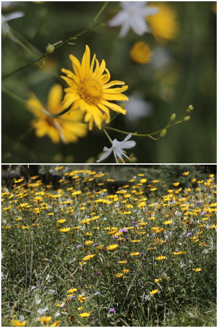 Increase Creativity Challenge Juli - Farbe gelb - Blumen - diephotographin