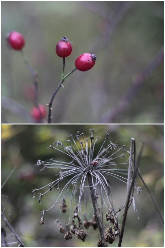 Beeren und verblühte Blumen - Herbst in Bayern - #fotoprojekt17 Herbstspaziergang - diephotographin