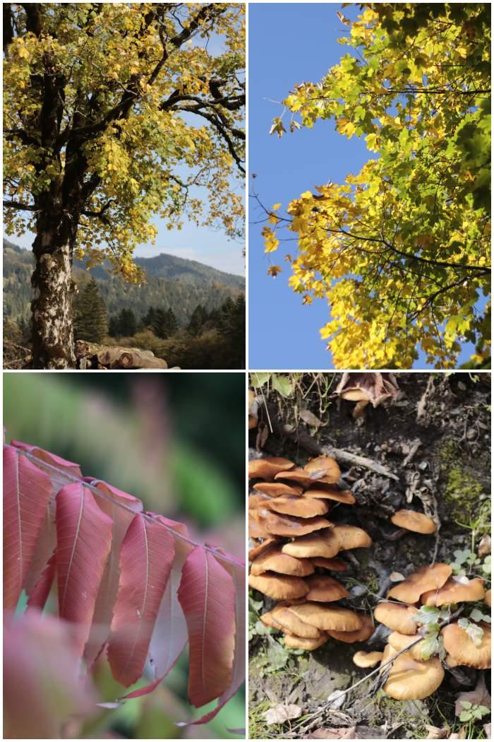 Buntes Herbstlaub und Pilze - Herbst in Bayern - #fotoprojekt17 Herbstspaziergang - diephotographin