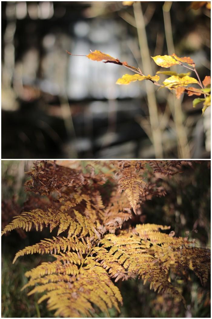 Buntes Herbstlaub - Herbst in Bayern - #fotoprojekt17 Herbstspaziergang - diephotographin