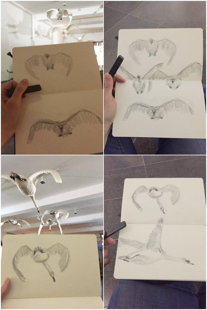 Fliegende Schwäne im Themenraum Bewegung als schnelle Grafit-Skizzen - Zeichenkurs Museum Wiesbaden - diephotographin