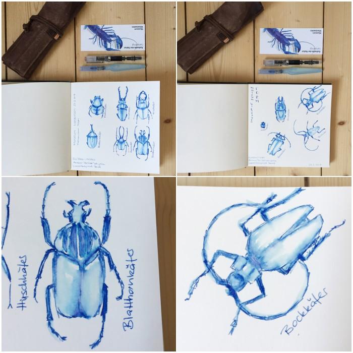 Schnelle Skizzen mit dem Füller und einem Wassertankpinsel bei den Käfern - Zeichenkurs Museum Wiesbaden - diephotographin
