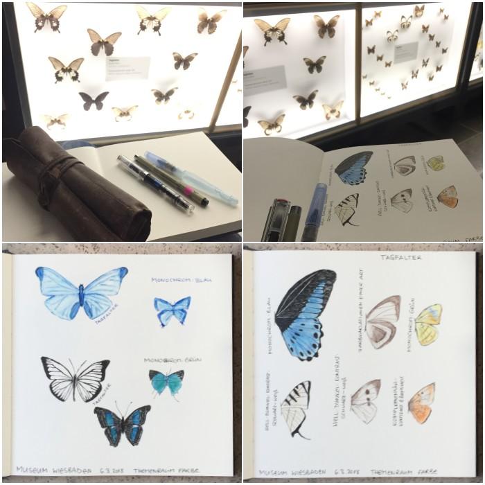 Schnelle Skizzen mit dem Füller, einem Wassertankpinsel und Aquarell-Buntstiften bei den Schmetterlingen - Zeichenkurs Museum Wiesbaden - diephotographin