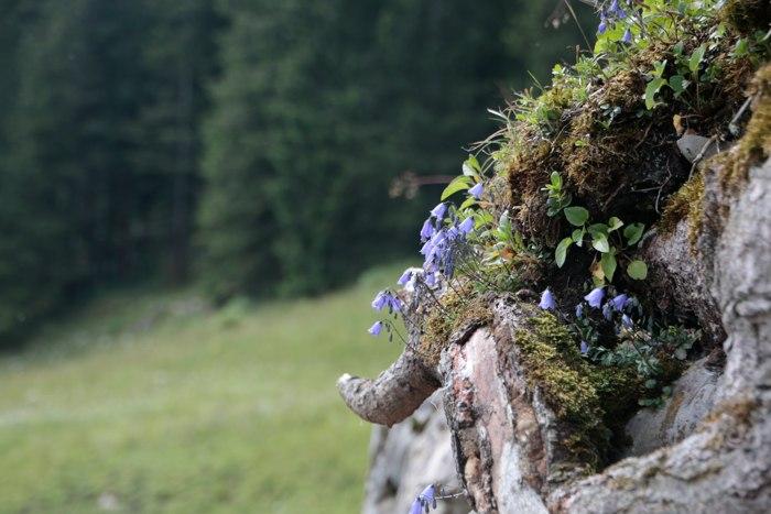 Mangfallgebirgen am Spitzingsee - Bayern, Deutschland - Sommer in den Bergen - diephotographin