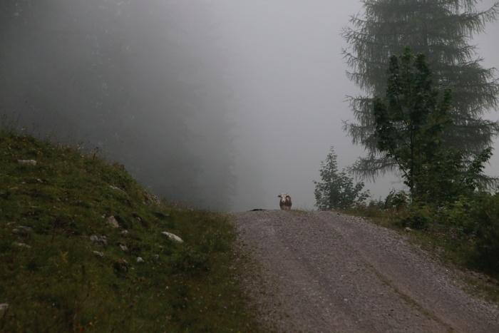 Wanderweg entlang der Sommeralmen im Nebel - Sommer in den Bergen in Bayern - Increase Creativity