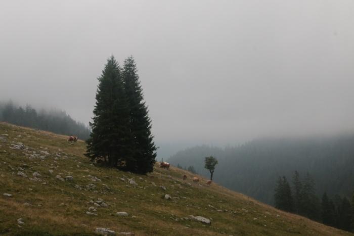Sommeralmen im Nebel - Sommer in den Bergen in Bayern - Increase Creativity