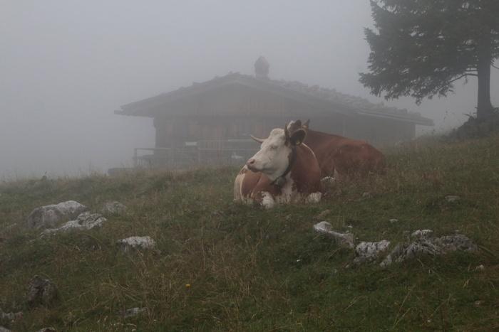 Almhütte mit Kuh auf der Sommeralm im Nebel - Sommer in den Bergen in Bayern - Increase Creativity