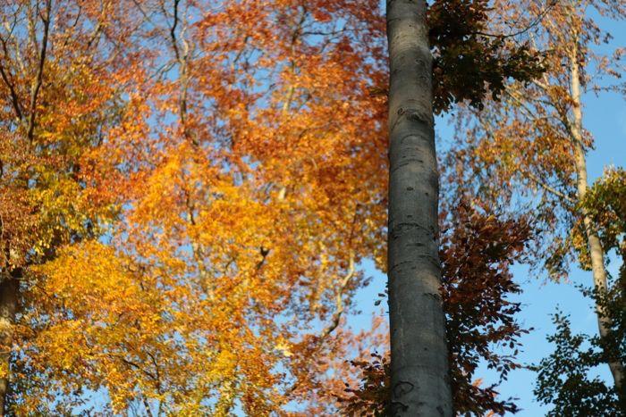 Herbstfarben im Wald in Wiesbaden