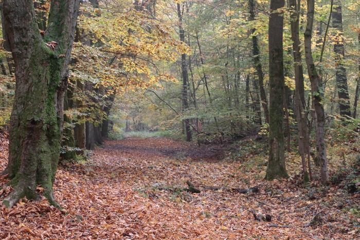 Herbstlicher Weg im Wald in Wiesbaden