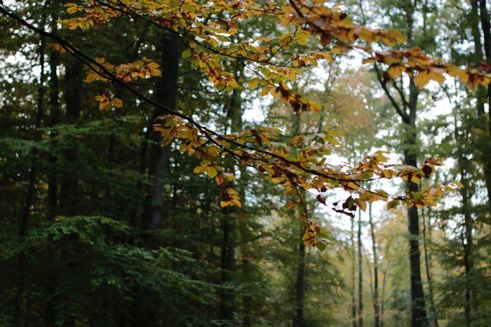 Herbstwald in Wiesbaden
