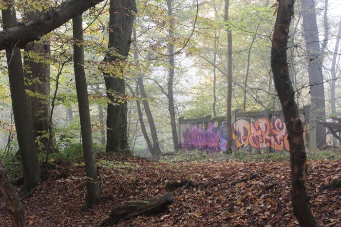 Mauer mit Graffiti im nebligen Wald - Increase Creativity
